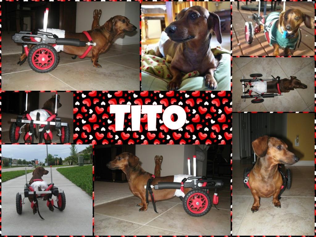 Tito-collage2