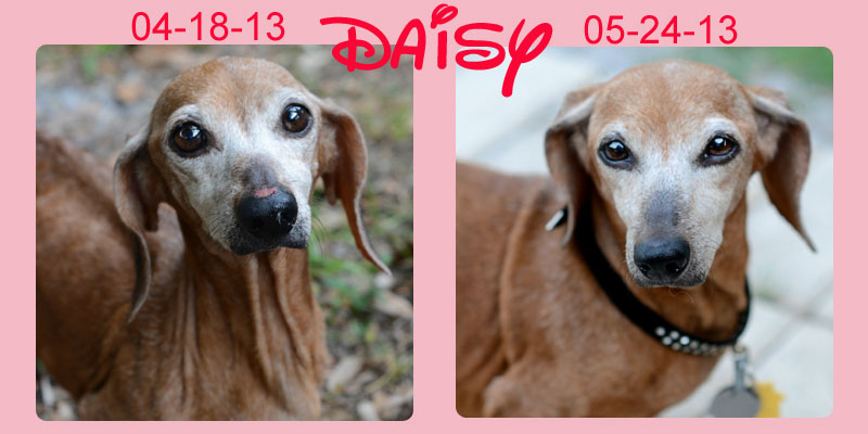 daisy-before-after