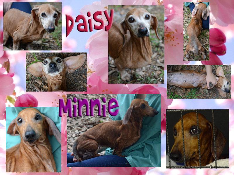 daisy-minnie1
