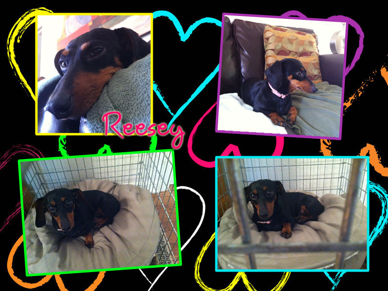 reesey-collage1