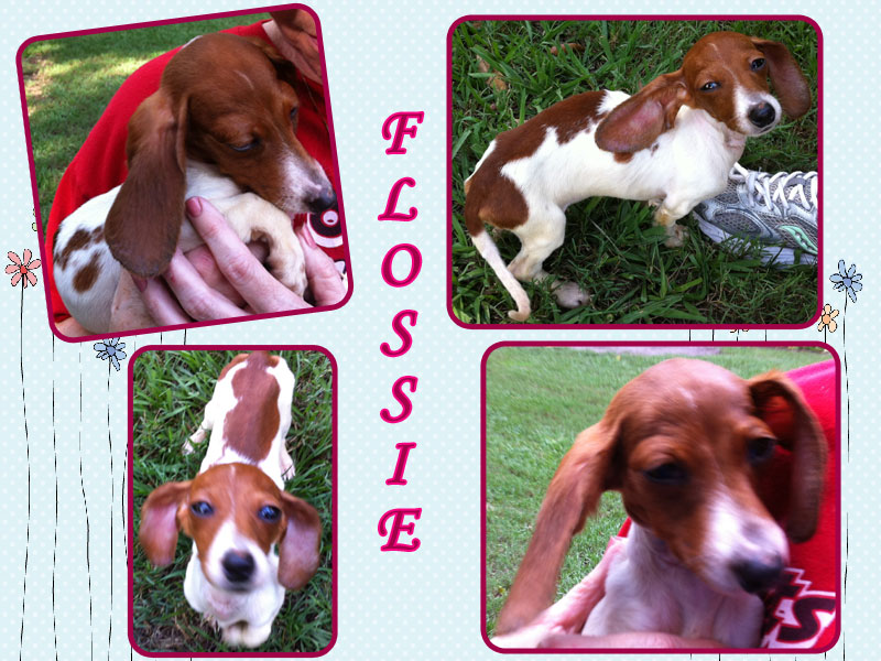 flossie-collage1