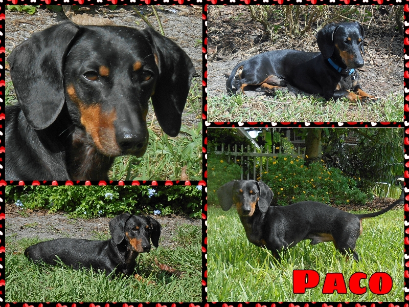 paco2-collage