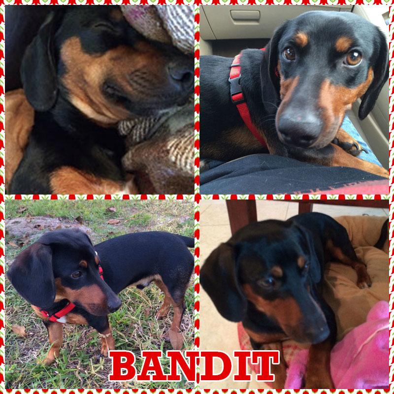 bandit-collage2