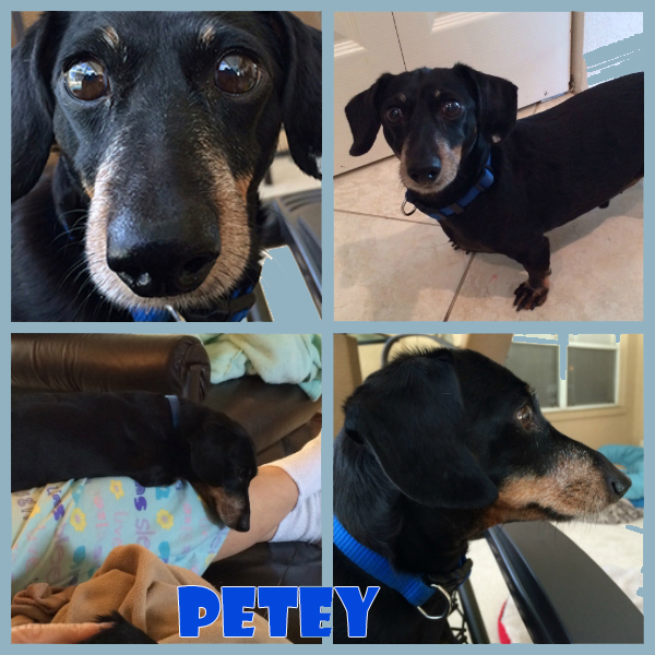petey-collage2