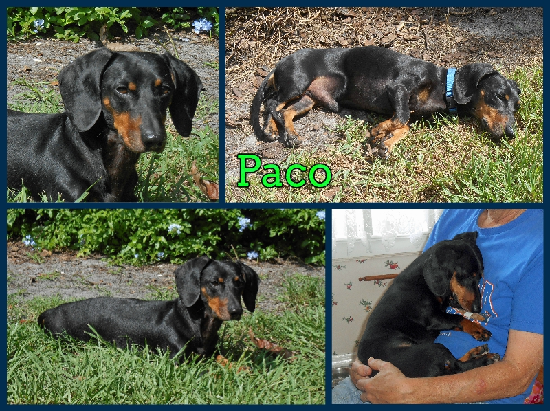 paco-collage-1-3-16